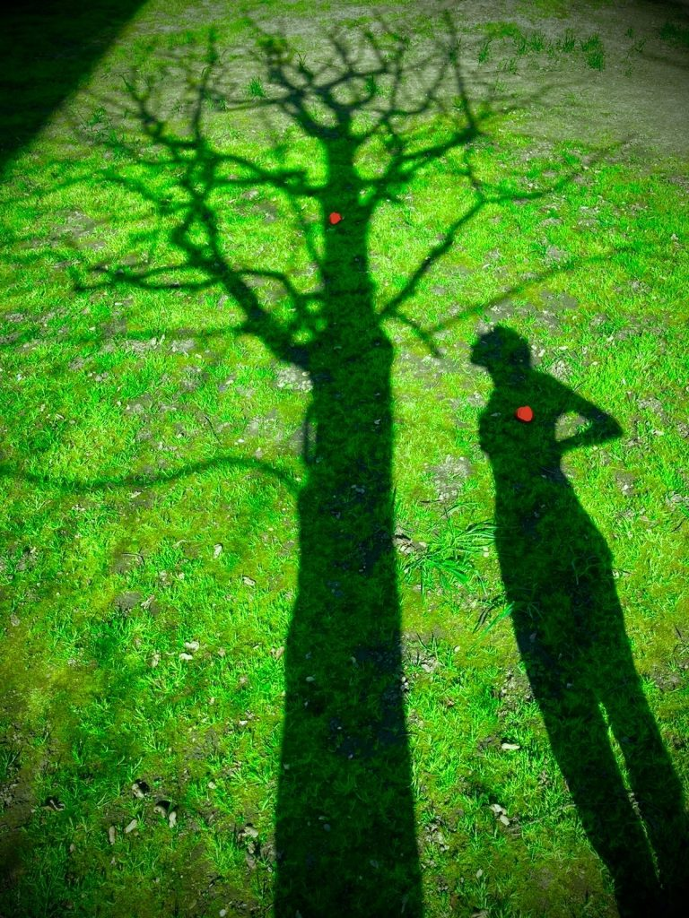 Shadows on grass. Shadow person with red squishy heart placed on chest looks up at a shadow tree with red squishy heart placed on trunk